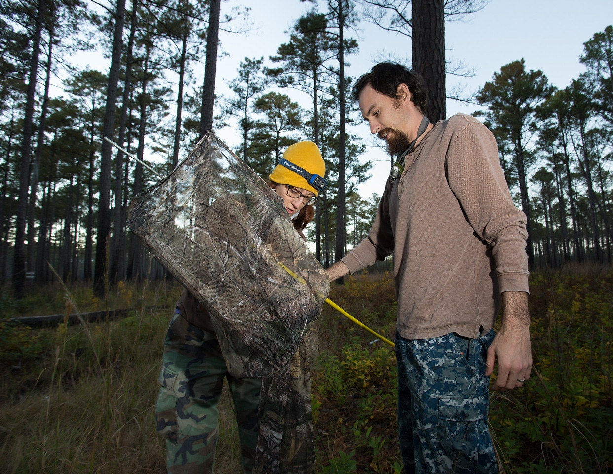 Chance Hines (rt) and Laura Duval (lft) extract a woodpecker from a pole net after capture
