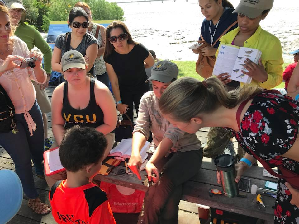 Team Warbler members Emma Davis from VCU and Liz Ames from Ohio State University demonstrate bird banding to members of  Sociedad Audubon de Panamá