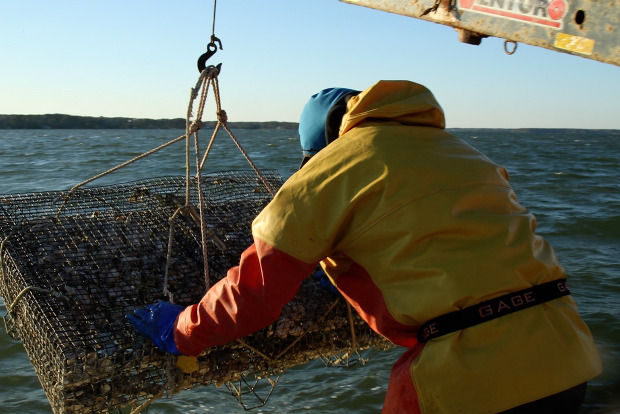 "A still of an oyster harvester in the short documentary film ""An Oyster's-Eye View of the Virginia Oyster Shell Recycling Program"