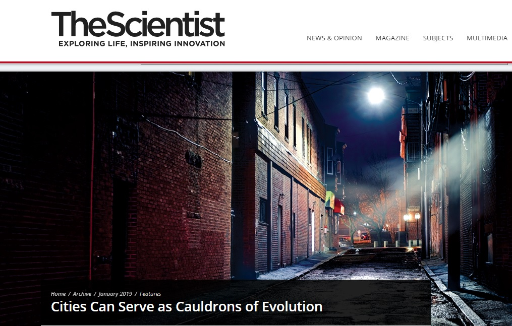 Screen shot from The Scientist website story,