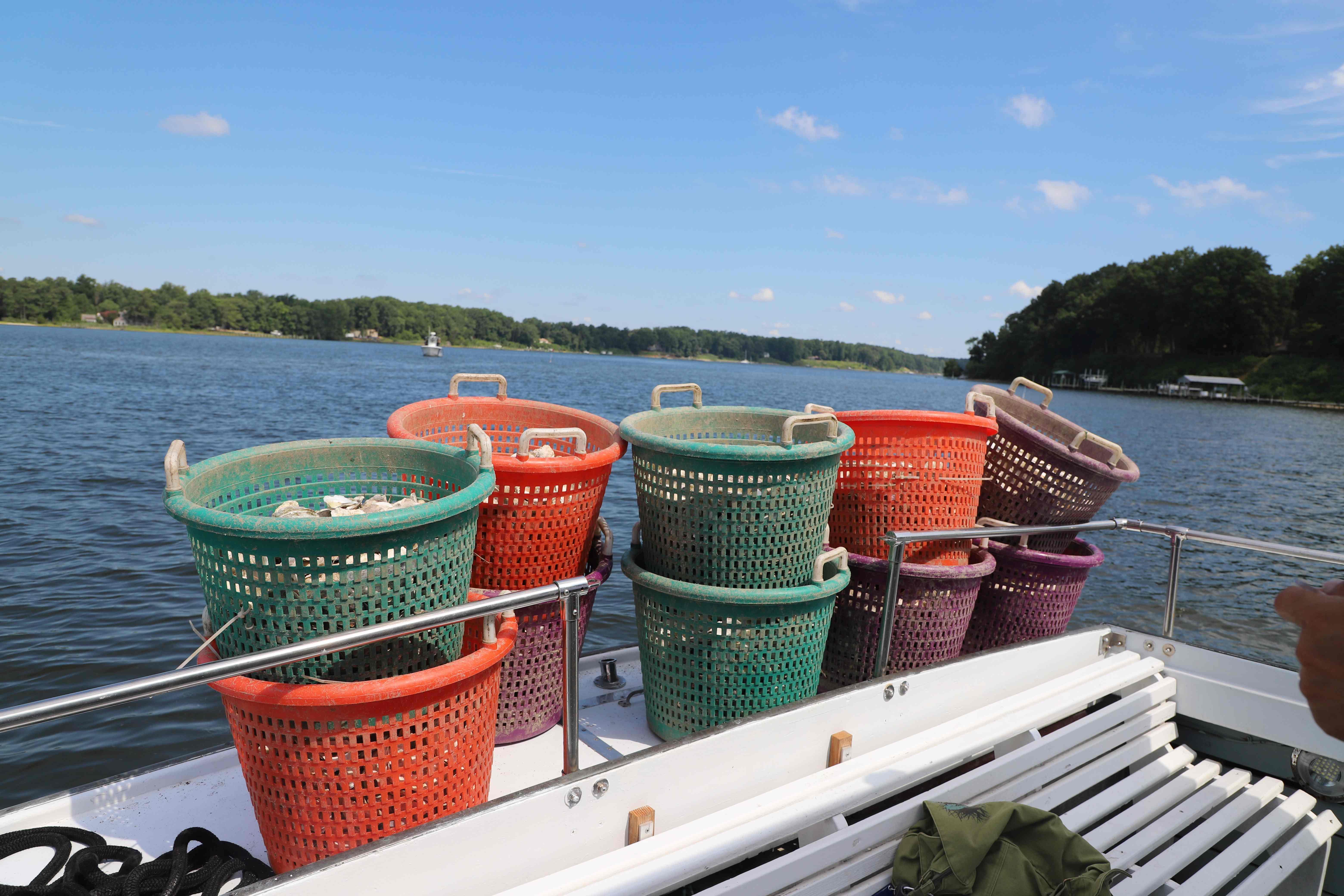 Buckets of shell ready to be placed into the Piankatank River